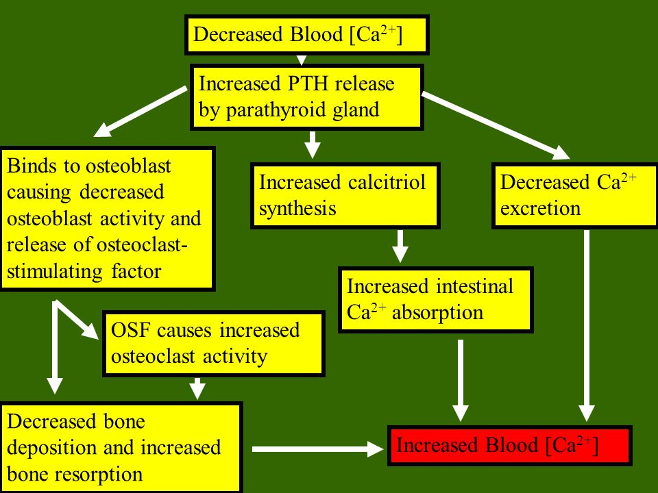Decreased Blood [Ca2+] Increased PTH release by parathyroid gland.